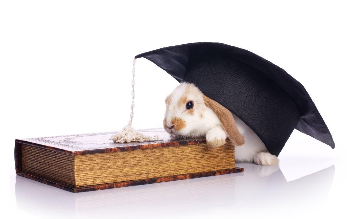 Umfrage, Umfrage Doktorarbeit, Umfrage Promotion, Doktor, Dissertation, Promotion, sexuelle Zufriedenheit